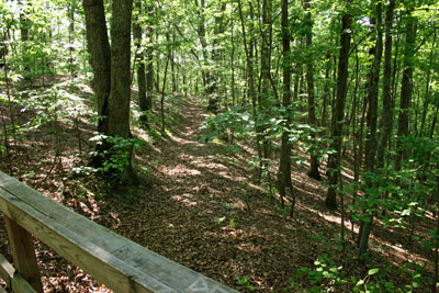 Allatoona Pass Federal Trenches